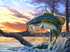 pesca de black bass con señuelos