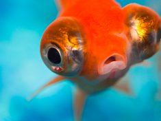 órganos sensoriales de los peces