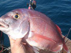 pescando pargos a jigging