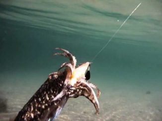 pesca del calamar a eging