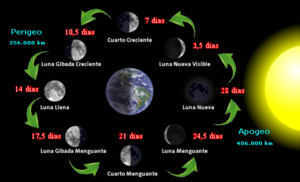 La influencia de la Luna en la Pesca + Tablas Solunares y Calendario ...