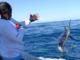pesca de marlin
